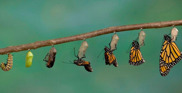 Aprendizaje para el cambio